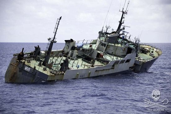 Sea Shepherd Brigitte Bardot Sinks